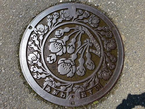 flower japan cherry 桜 日本 manhole 花 kochi agawa マンホール 高知県 吾川村