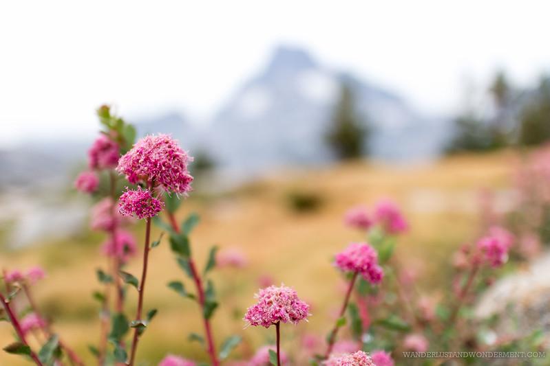Wildflowers at Thousand Island lake