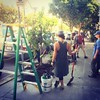 Urban tree planting in my neighborhood , thanks to non profit Friends of the Urban Forest
