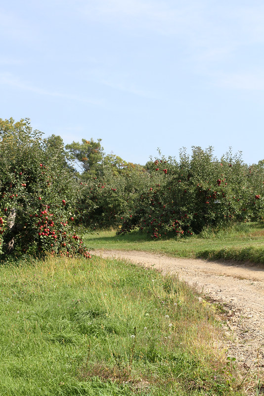 A Trip to the Apple Orchard + an Apple Recipe Roundup | girlversusdough.com @stephmwise