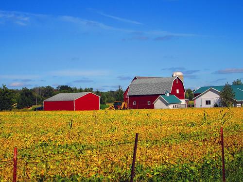 blue red green field yellow barn rural beans michigan farm country farming bluesky silo crop ag agriculture redbarn raytownship