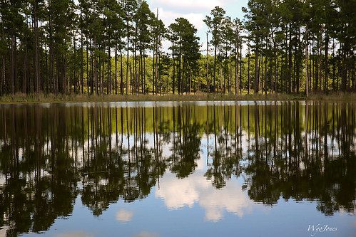 trees reflection clouds alabama wing nationalforest pines np cloudscape buckpond longleafpine conecuhnationalforest wyojones southernpineforest openpondrecreationalarea