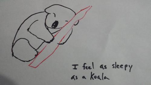 Tired koala