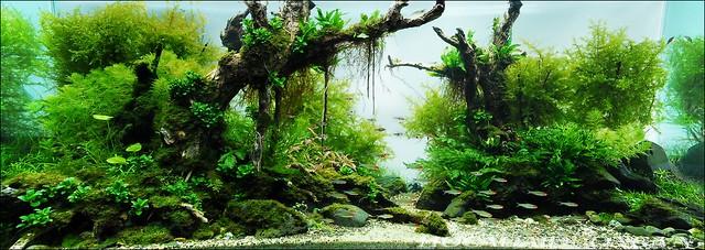 phông 3d hồ cá đại dương phong dd-02