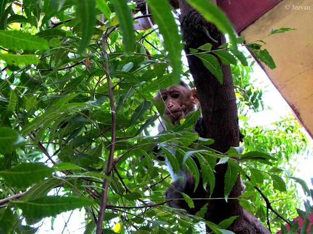A monkey peek