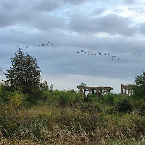 Migration #Rosemount #fall #onlyinmn