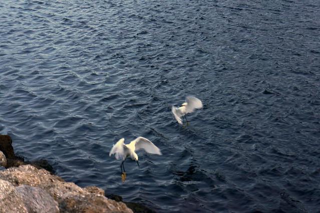 those white birds again!