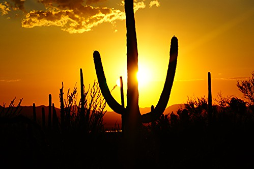 park sunset vacation arizona cactus usa southwest west america us tucson september national western saguaro parc 2014 hazboy hazboy1 dswt