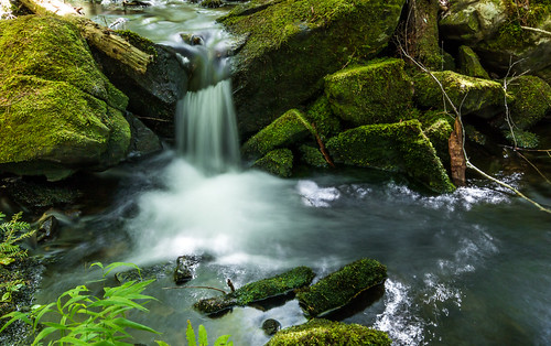 water moss rocks novascotia sigma1020mm ellershouse canon70d dawsonbrook