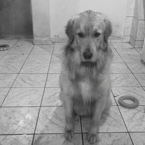 Molhado...