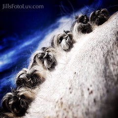Love the tones of the mane!