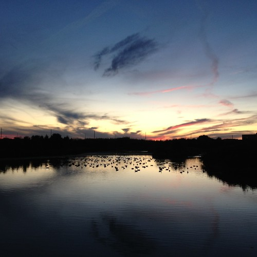 Geese in Kanata made this tranquil sunset quite loud.