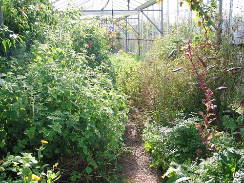 Secret Herb Garden, Edinburgh