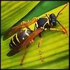 Bugsy #hamgardens #thetron #wildlife
