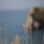 Lulworth Cove Grasses