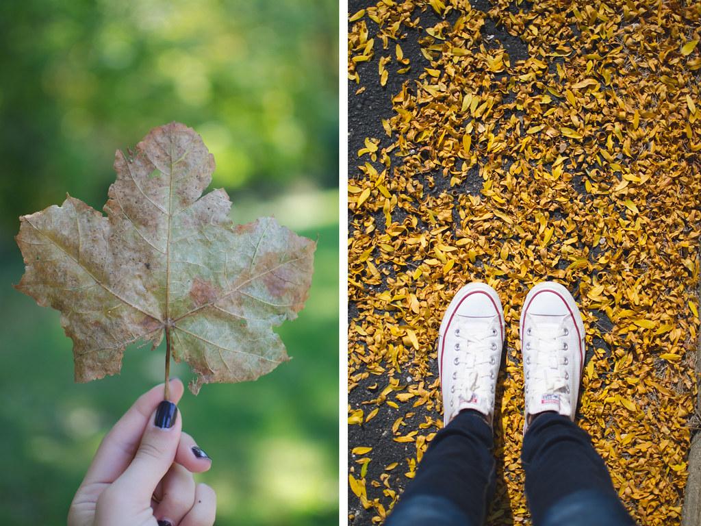 Beautyosauruslex-autumn-leaves-converse