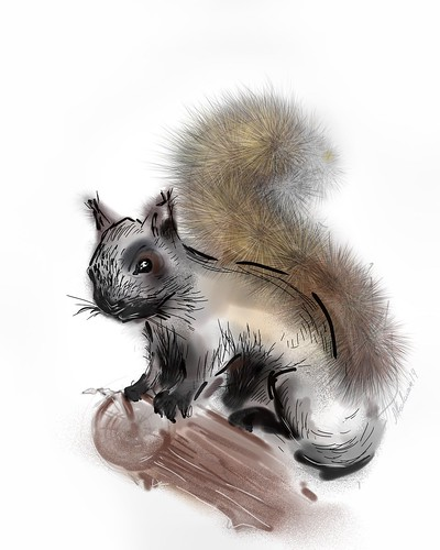 Squirrel digital drawing