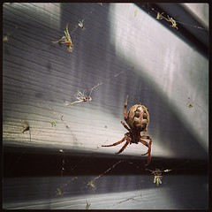 Spider at Work, with Insects Trapped in Web