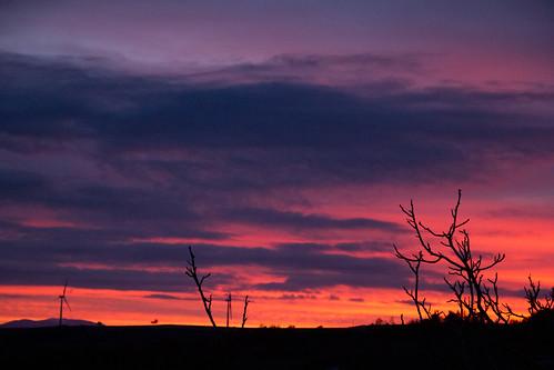sunset red sky alberi sunrise tramonti molise cieli ilmoliseesiste destinazionemolise