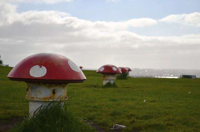 Mushrooms! @ Mt. Victoria