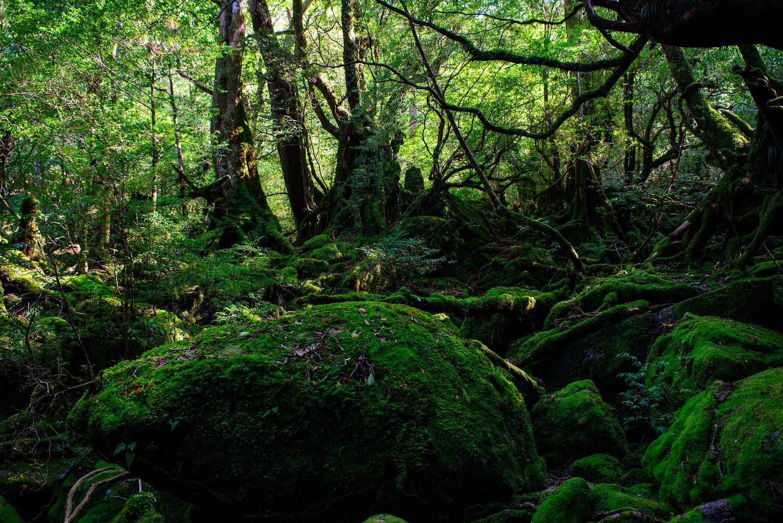 屋久島登山 荒川-縄文杉-白谷雲水峡を一日で