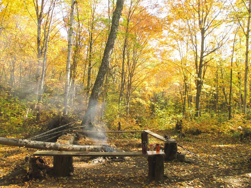 Cut Log Campsite