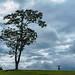 Punggol Tree Thing