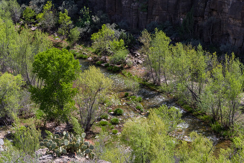 arizona coconinonationalforest fr131 fr9505 forestservice pentaxk1 redrockrangerdistrict sycamorecanyonroad usfs verderiver desert forest outdoors clarkdale unitedstates