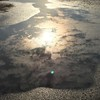 Sunshine in the puddle