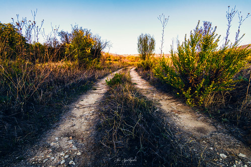 green landscape landscapephotography vegetation lines nature path pathway leadinglines cyprus sony sonya6000 ilce6000 samyang samyang12mmf20ncscs manfrottobefree