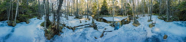 Frozen Marshland in the Tyresta National Park 19th of March 2017