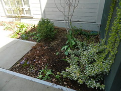 Summerhill Toronto spring backyard garden cleanup after by Paul Jung Gardening Services
