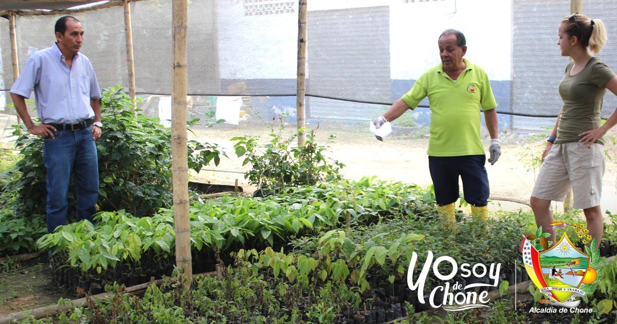 Quince mil plantas listas para agricultores de Chone