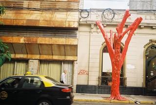 El arbol rojo