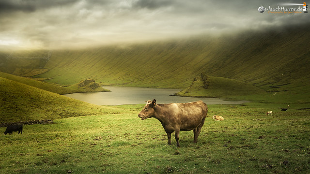 The crater of cattles