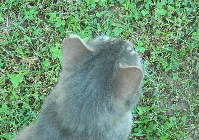 Ear Tip