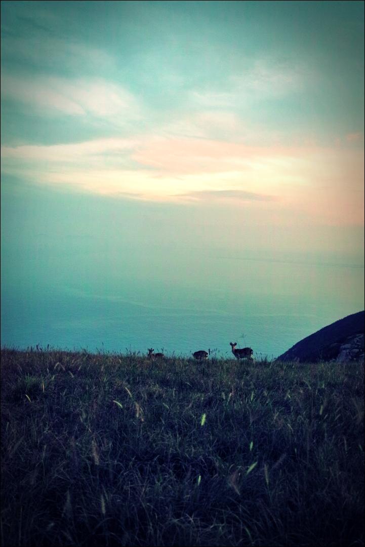 사슴-'굴업도 백패킹'