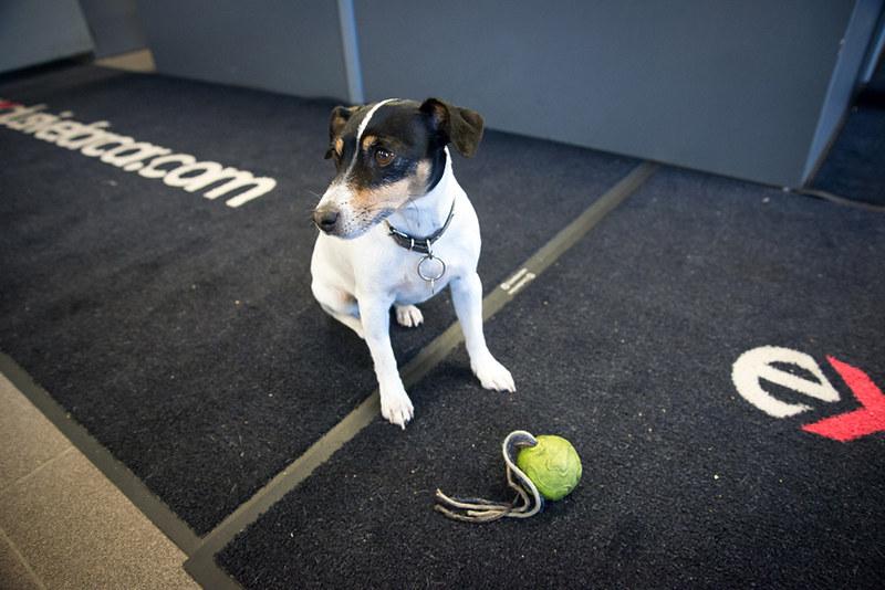 The Vaalimaa dog