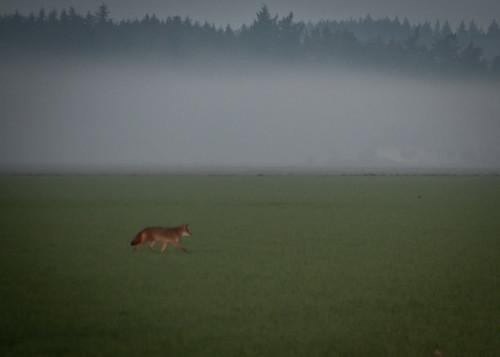 10-03-14 Coyote