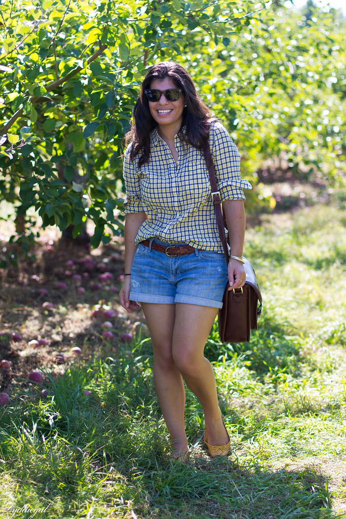 plaid shirt and denim shorts for apple picking.jpg