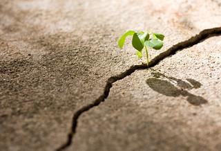 Attitude in Adversity