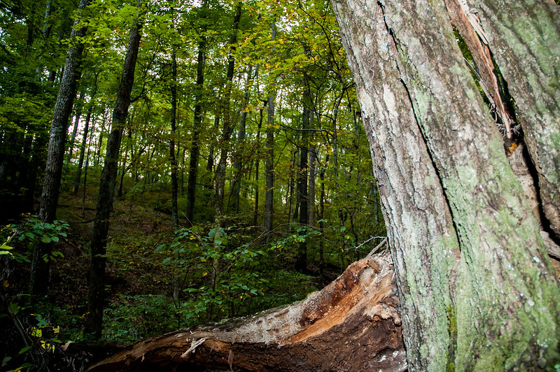 Selma Steele State Nature Preserve - October 6, 2014