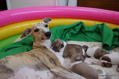 Micra & puppies DSC05495