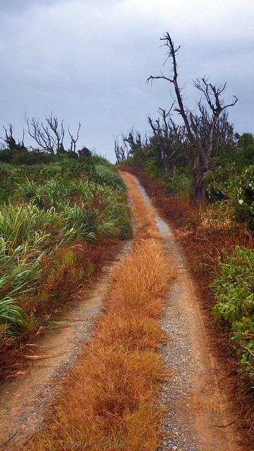 FARM ROAD UNDER A TYPHOON SKY
