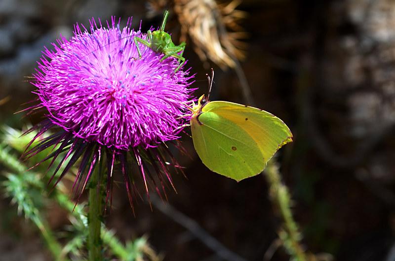 A Bugs Life, Mljet, Croatia