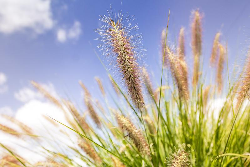 Dawno temu w trawie