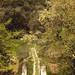 Oasi WWF Bosco di San Silvestro