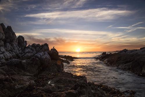 birds hermanus clouds southafrica rocks ngc sunsets coastal atlanticocean goldenhour onrus westerncape greatphotographers greaterphotographers greatestphotographers