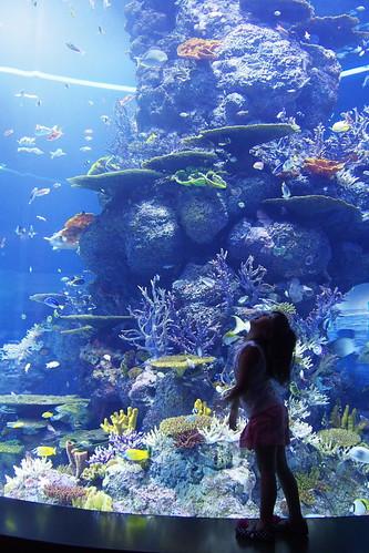 beautiful sea world
