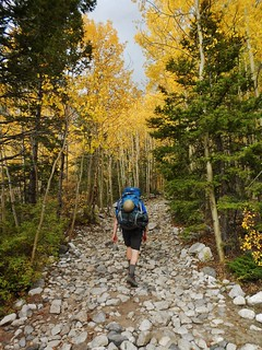 Mark in the Avenue of Aspens